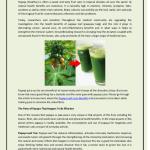 Uses of Papaya Leaves