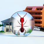 Top 5 Residential Pests in Sydney