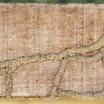 All About Termites: Pest Control & Termite Treatment Sydney