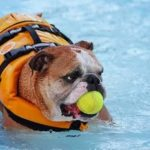 How to keep your dog safe while swimming