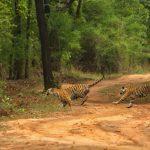 Beautiful Bandhavgarh Package |Safari Package  Bandhavgarh National Park
