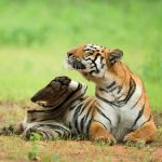 Tantalizing Tadoba Package | Tadoba National Park Safari Package