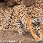 Tadoba Safari Tariff across gates | Tadoba National Park Safari Price