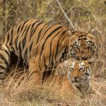 Best Season Visiting Tadoba | Best Time To Visit Tadoba National Park