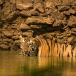 Tadoba Jungle Safari | Book Jungle Safari To Tadoba National Park