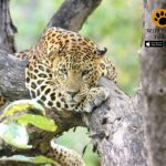 What is the best Kabini Itinerary? | kabini wildlife sanctuary Safari Packages