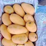 Mango! History and Varieties in Pakistan