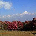 Nepal Rhododendron Trek, Rhododendron Trekking in Nepal -NMH Treks.